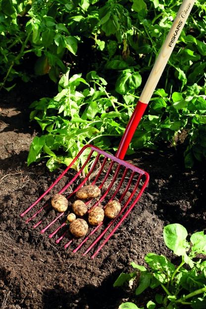 Kartupeļu šķirnes