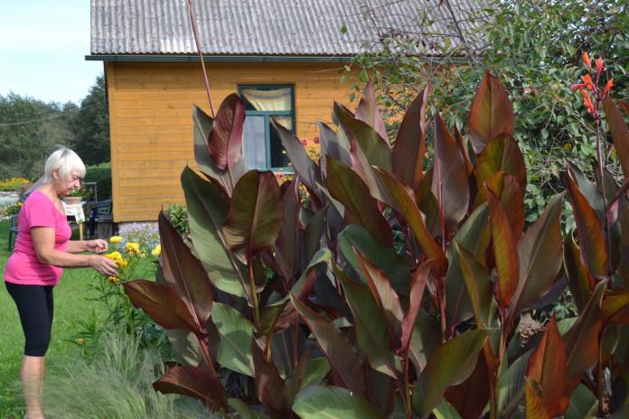 Zigrīda savā dārzā